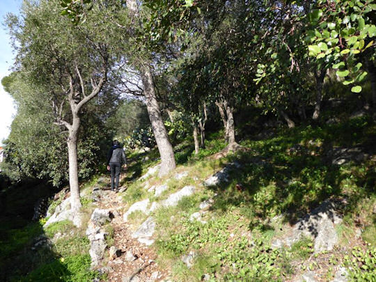 Through the Olive Grove Woods