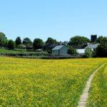 Hay Meadows Askrigg