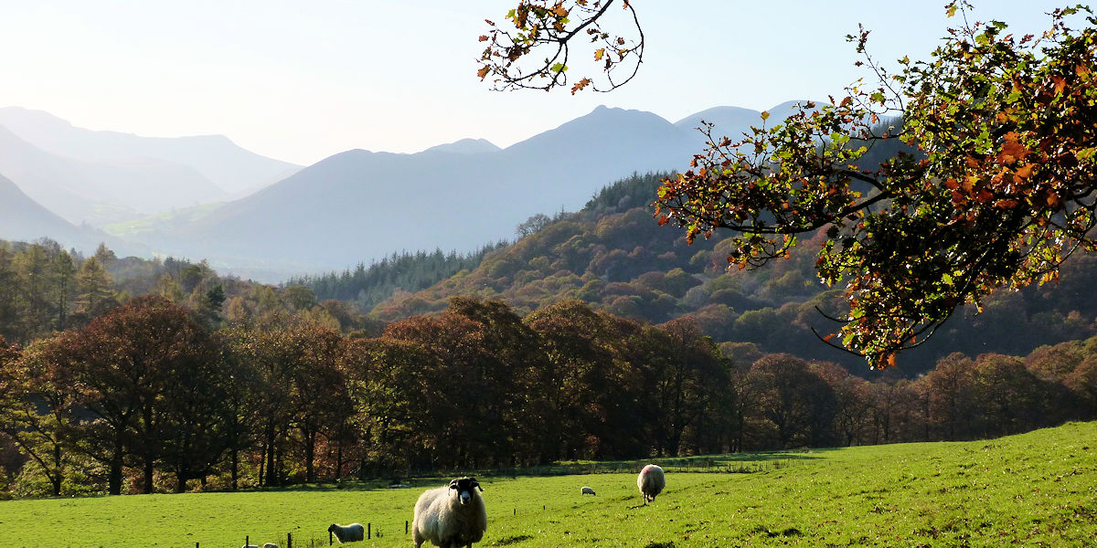 Causey Pike from Skiddaw